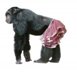 Schimpanse_Proto