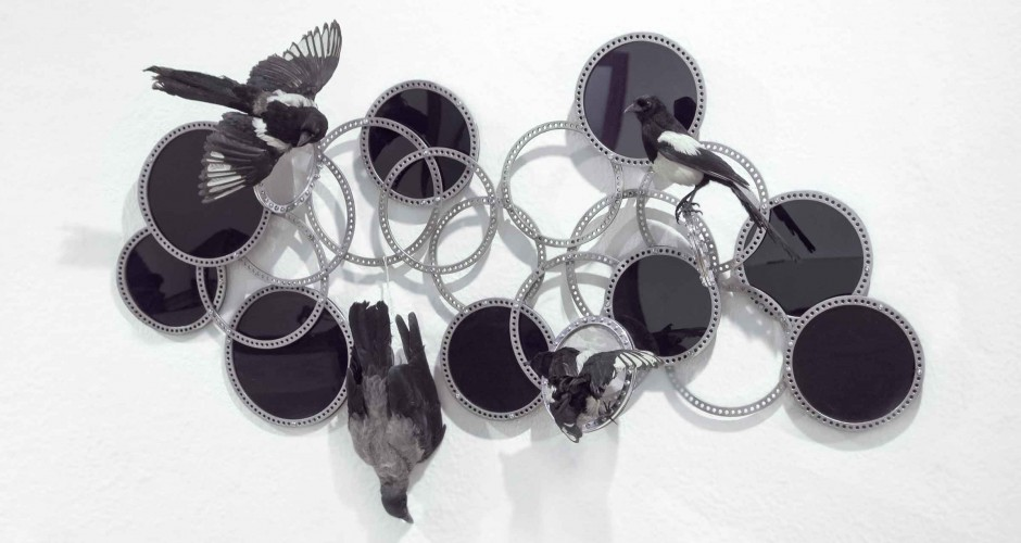 image still life with magpies